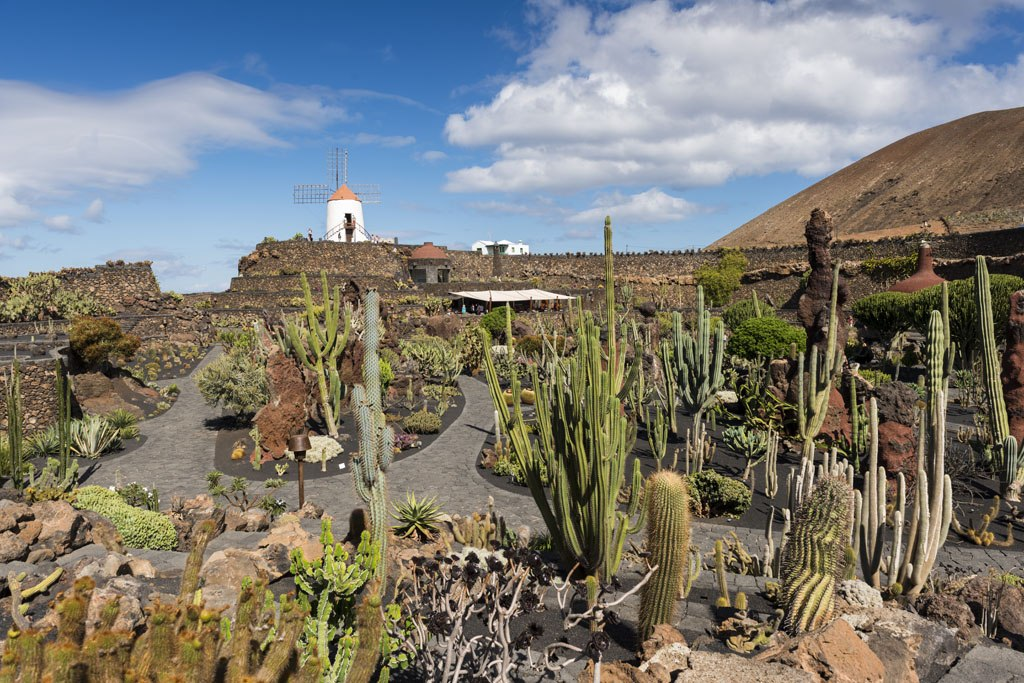 Jardin De Cactus Cactus Garden