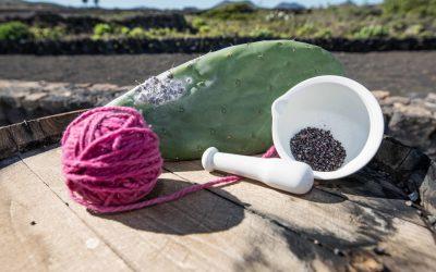 Mercado autóctono sostenible_07_LR@CACT Lanzarote
