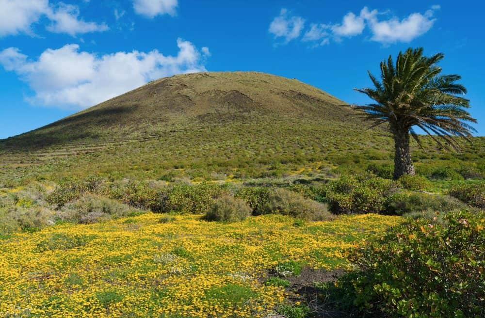 Volcán de la Corona con palmera - Haría - Turismo Lanzarote