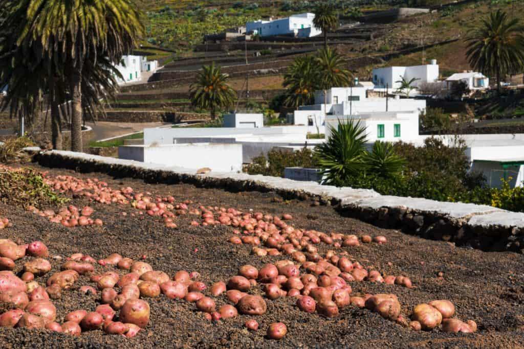 Haria-LosValles-05_LR_© Turismo Lanzarote