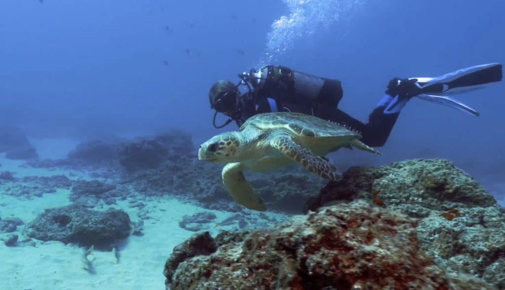 Buceo con tortugas Turismo Lanzarote