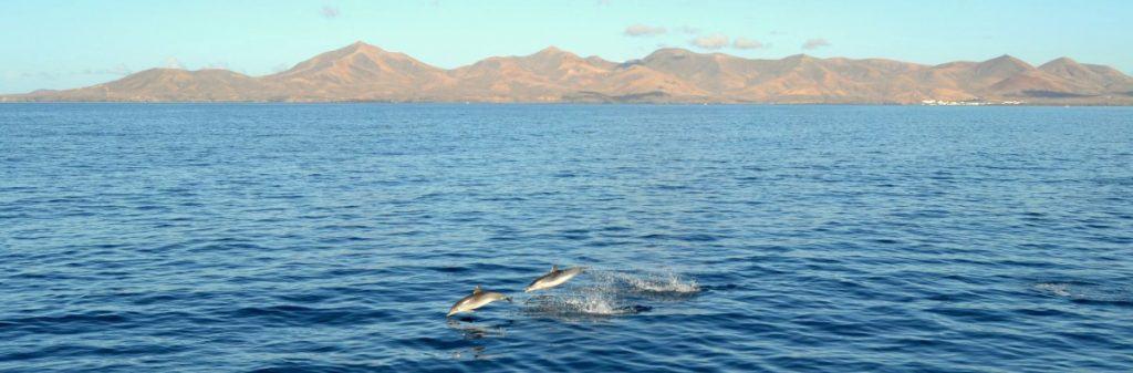 Cetáceos, delfines, buceo Turismo Laznarote Reserva de la Biosfera