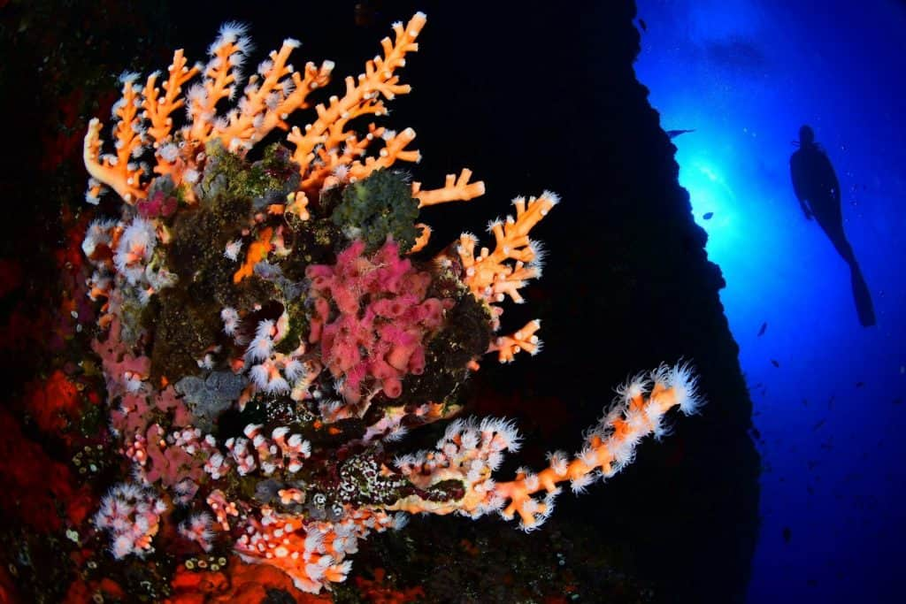 Bosques marinos-