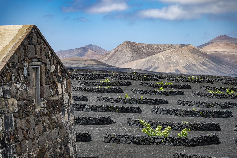 paisaje volcánico y socos viñas La Geria- Turismo Lanzarote